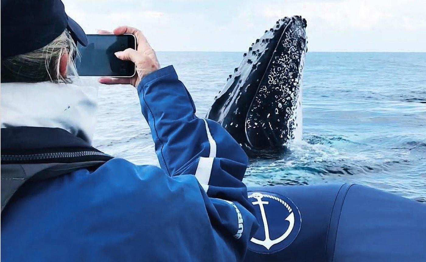 Byron Bay whale Watching